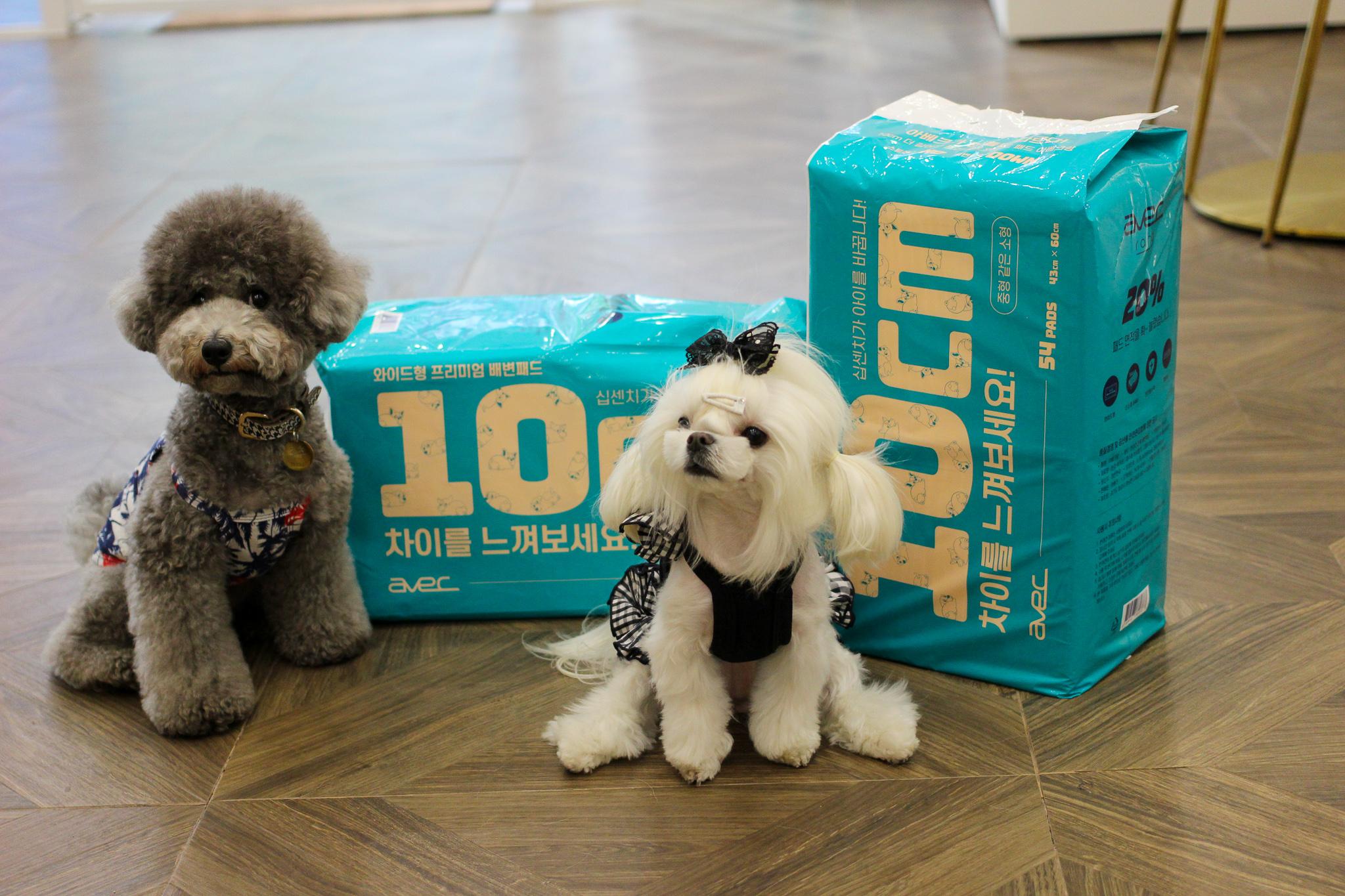 [12개월 정기배송]아베크랑 10cm - 겁나 큰 중형
